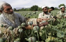 drug trafficking from afghanistan 52016bbfa29ae1a04e724ffc1712387f 226x145 - Russia and Uzbekistan Agreed to Counter Drug Trafficking from Afghanistan