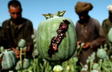 580f7d38b28a645d008b49da 1920 960 226x145 - The War on Drugs in Afghanistan 'has just been a Total Failure'
