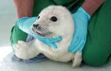 3500 3 226x145 - A Baby Seal