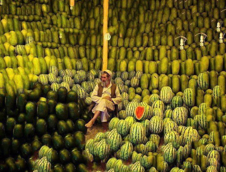 یوه کیلو هندوانه په یوه افغانۍ پلورل