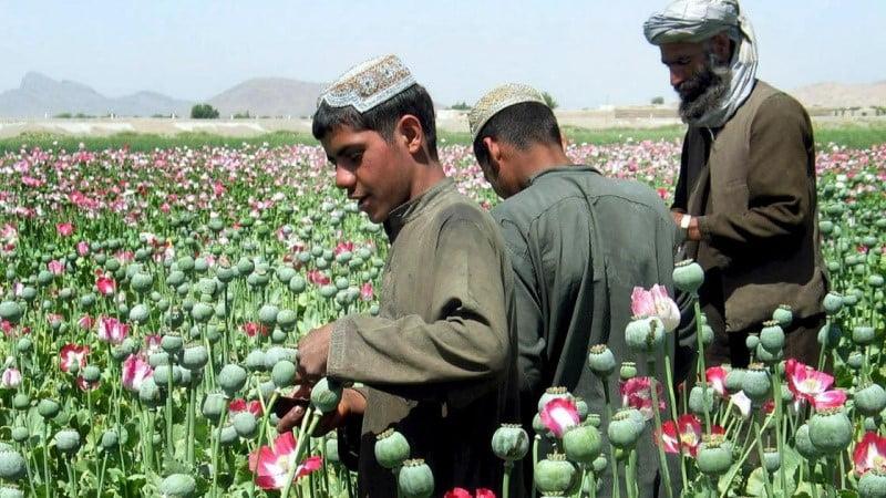 په افغانستان کی نشه ایزوتوکو دقاچاق په اړه دضمیرکابلوف ادعا