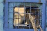 زندانی 1 150x100 - فرار ناکام یک زندانی از زندان مرکز ولایت جوزجان