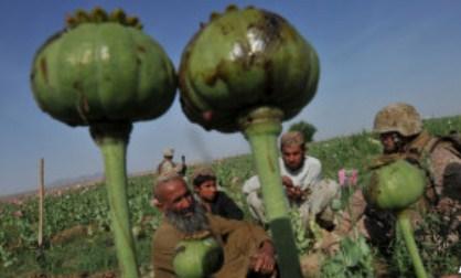 مواد مخدر1 - افغانستان، رکورد دار تولید مواد مخدر در جهان