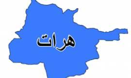 هرات2 - ادامه روند تحویل سلاح به پروسه دایاگ در هرات