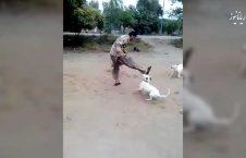 درگیری جالب یک مرد با سه سگ