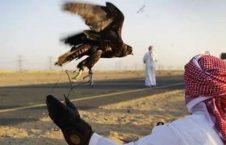 چرایی سفر شاهزاده گان عرب به پاکستان؛ شکار یا هوسرانی؟