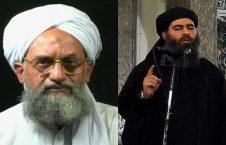 داعش القاعده 226x145 - هشدار؛ داعش و القاعده متحد می شوند!