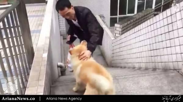 ژینگ 2 - وفاداری باورنکردنی یک سگ به صاحبش! + عکس