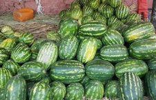 افزایش 10 فیصدی حاصلات تربز ننگرهار