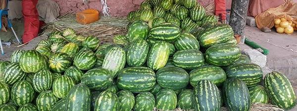 تربز - افزایش 10 فیصدی حاصلات تربز ننگرهار