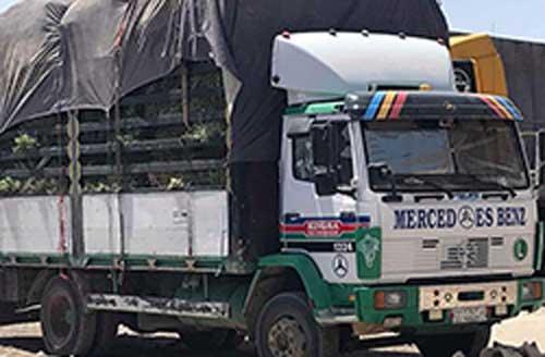 ترکمنستان واگون 1 - کمک های ترکمنستان به هرات رسید
