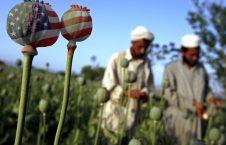 مواد مخدر 226x145 - اذعان امریکا به یک ناکامی دیگر در افغانستان