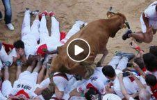 ویدیو حمله گاو های وحشی هسپانیا 226x145 - ویدیو/ حمله گاو های وحشی به مردم در سرک های هسپانیا!