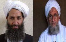 و طالبان 226x145 - اتحاد مستحکم القاعده و طالبان در افغانستان