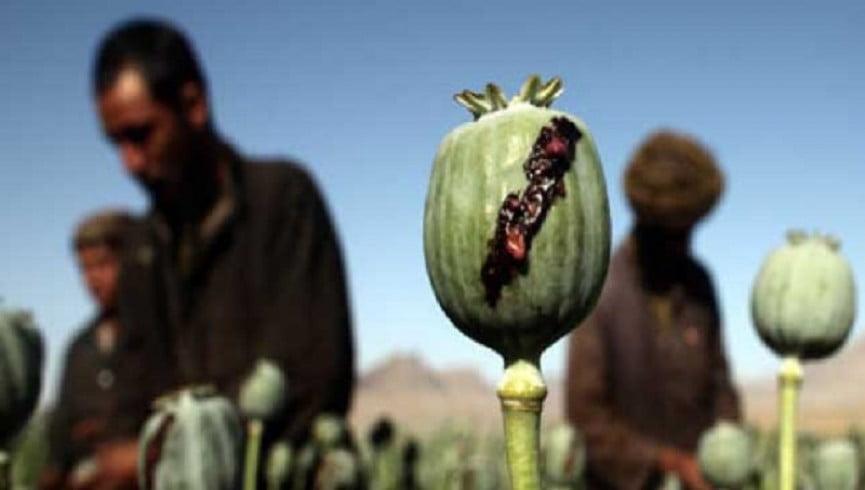 مواد مخدر 1 - افغانستان؛ بزرگ ترین تولید کننده مواد مخدر جهان