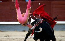ویدیو بدچانسترین گاوباز جهان 226x145 - ویدیو/ بدچانسترین گاوباز جهان