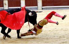 گاو باز 226x145 - ضربات وحشتناک گاو وحشی به گاوباز هسپانیایی! + تصاویر(18+)
