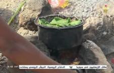 برگ درخت 226x145 - تصاویر/ اطفال یمن از فرط گرسنگی برگ درخت میخورند!