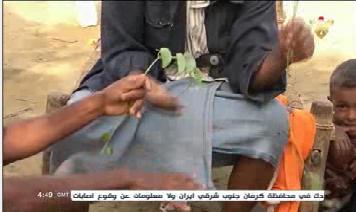 برگ درخت 3 - تصاویر/ اطفال یمن از فرط گرسنگی برگ درخت میخورند!