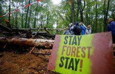 تخریب جنگل 4 226x145 - تصاویر/ اعتراض به تخریب جنگل در جرمنی