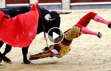 ویدیو/ لحظه مرگ دردناک یک گاوباز!