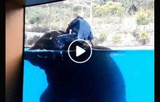 ویدیو نمایش دردناک فیل آب 226x145 - ویدیو/ نمایش دردناک فیل در آب
