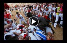 ویدیو احترام گاو انسان بالاتر 226x145 - ویدیو/ جایی که احترام گاو از انسان بالاتر است!