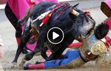 ویدیو مراسم خونین گاوبازی مکزیک 226x145 - ویدیو/ مراسم خونین گاوبازی در مکزیک
