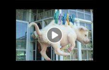 ویدیو کدامیک موجودات حیوان 226x145 - ویدیو/ کدامیک از این موجودات حیوان استند؟