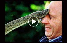 ویدیو اتفاق ناگوار نیش زدن مار 226x145 - ویدیو/ اتفاق ناگواری که پس از نیش زدن مار رخ می دهد