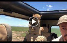 ویدیو/ بازی با پلنگ؛ تفریح ثروتمندان عرب