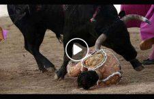 ویدیو مرگ گاوباز جوان مکزیک 226x145 - ویدیو/ مرگ گاوباز جوان در مکزیک