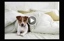 ویدیو هوتل حیوانات مصر افتتاح. 226x145 - ویدیو/ هوتل حیوانات در مصر افتتاح شد