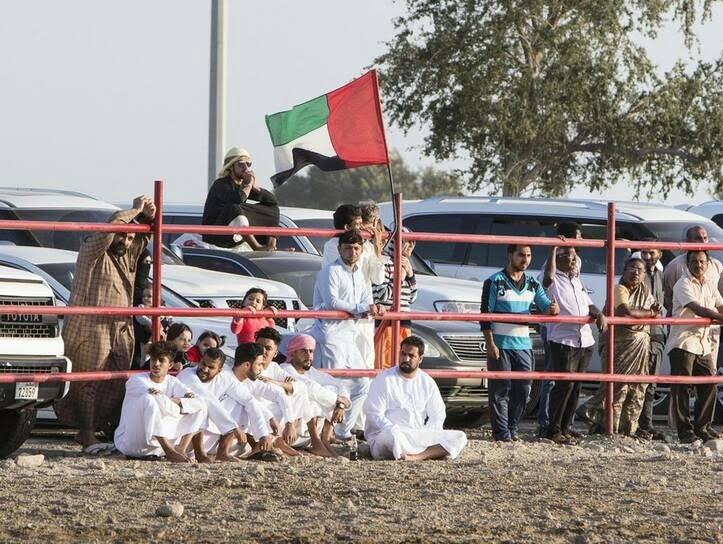 گاو بازی امارات 9 - تصاویر/ تفریح عجیب مردم امارات