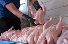مرغ 226x145 - افغانستان واردات مرغ ایرانی و سایر محصولات مرتبط با آن را ممنوع کرد