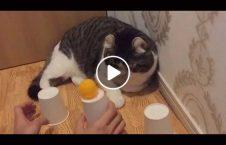 ویدیو باهوش پشک دنیا 226x145 - ویدیو/ باهوش ترین پشک دنیا