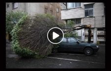 ویدیو حوادث عجیب غریب دنیا 226x145 - ویدیو/ حوادث عجیب و غریب در دنیا