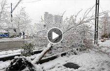 ویدیو سقوط درخت برف روی جوان 226x145 - ویدیو/ سقوط یک درخت برفی روی یک جوان