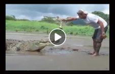 ویدیو غذا موجود دل شیر 226x145 - ویدیو/ غذا دادن به این موجود دل شیر می خواهد!