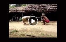 ویدیو نبرد عجیب پیرمرد هندو گوسفند 226x145 - ویدیو/ نبرد عجیب پیرمرد هندو با یک گوسفند