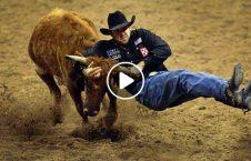 ویدیو نبرد مرگبار گاو وحشی 226x145 - ویدیو/ نبردی مرگبار با گاو وحشی