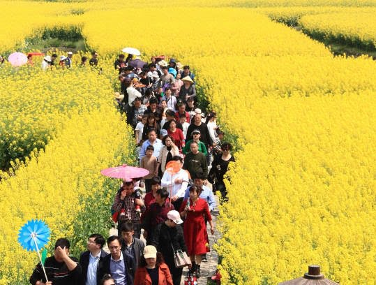 جشن گل چین 3 - تصاویر/ جشن گلها در چین