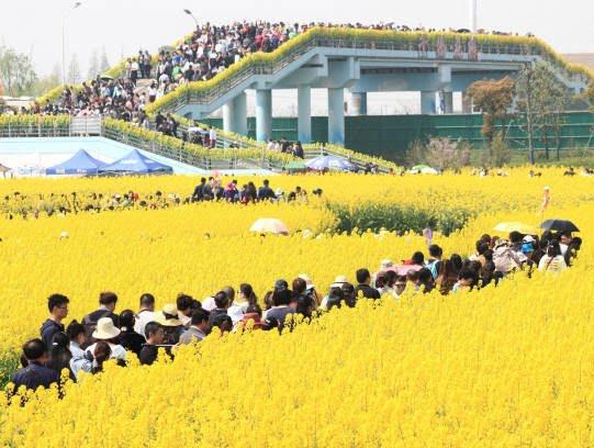 جشن گل چین 4 - تصاویر/ جشن گلها در چین