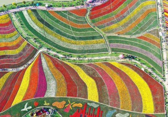 جشن گل چین 6 - تصاویر/ جشن گلها در چین