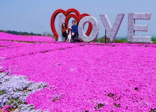 جشن گل چین 7 - تصاویر/ جشن گلها در چین