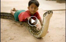 ویدیو بازی طفل 3 ساله مارغول پیکر 226x145 - ویدیو/ بازی طفل 3 ساله با مار غول پیکر
