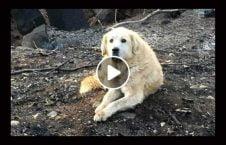 ویدیو سگ جنازه صاحب رها 226x145 - ویدیو/ سگی که جنازه صاحبش را رها نکرد