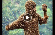 ویدیو مرد زنبور 226x145 - ویدیو/ مردی که زنبور می خورد!