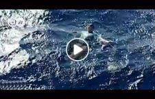 ویدیو پتلون جادو غرق بحر نجات.mp4 226x145 - ویدیو/ پتلون جادویی صاحبش را از غرق شدن در بحر نجات داد