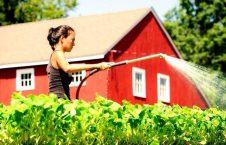 زراعت 226x145 - خرید زمین زراعتی در آسترالیا از سوی عرب ها
